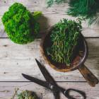 kruiden oogsten en vers verwerken